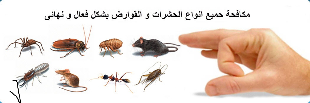 Photo of شركة مكافحة حشرات بجازان |0558232663 مع الضمان والخصم اتصل بنا